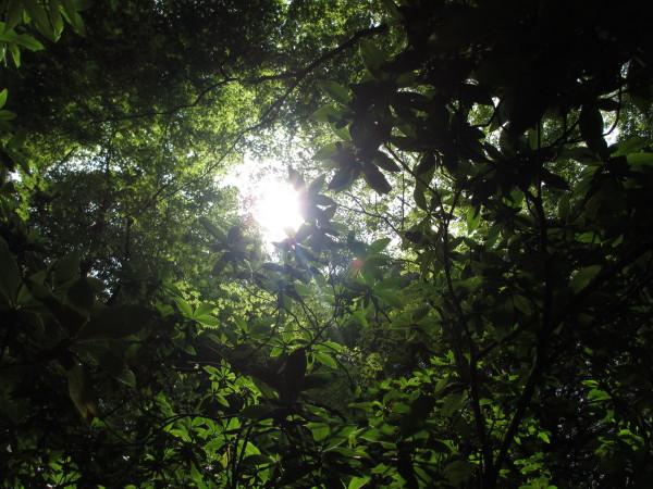 新緑天拝山.JPG