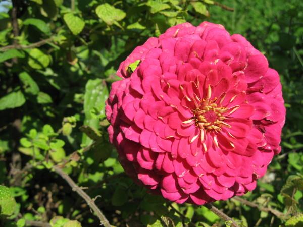 花の中のカエル1.JPG