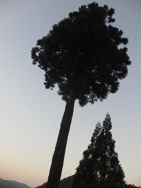 田中城跡二本の木600.jpg