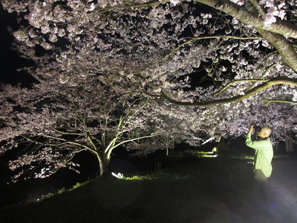 賢太郎さんと夜桜.jpg