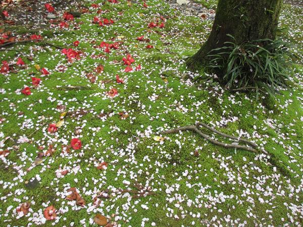 桜のはなびら.jpg