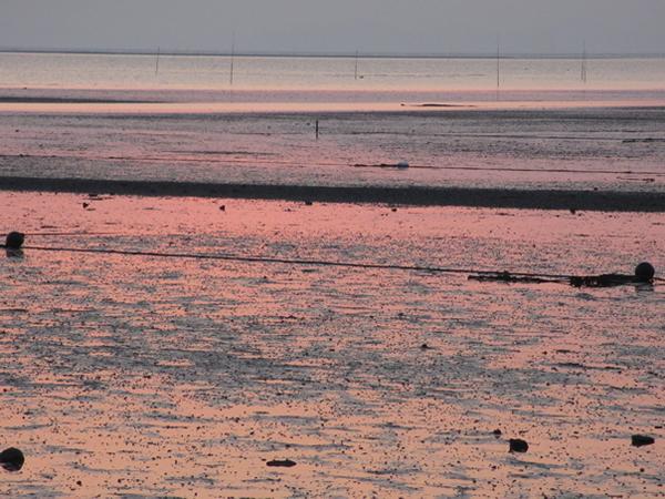 荒尾干潟ピンクのグラデーション600.jpg