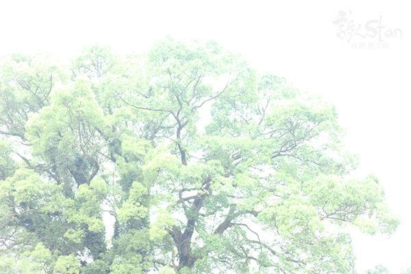 虚空塚古墳楠木600.jpg