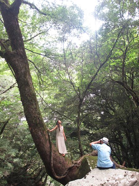 大樹と撮影風景600.jpg