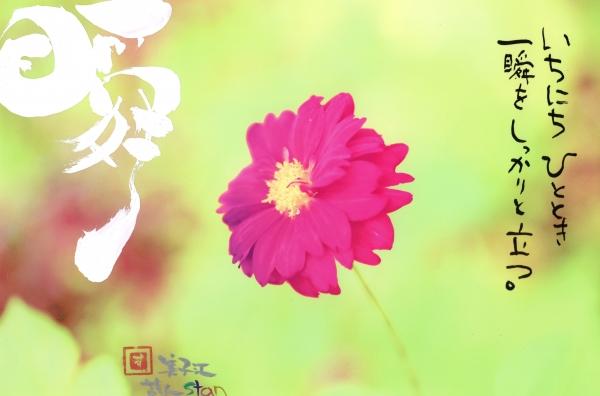 フォトメッセージ瞬.jpg