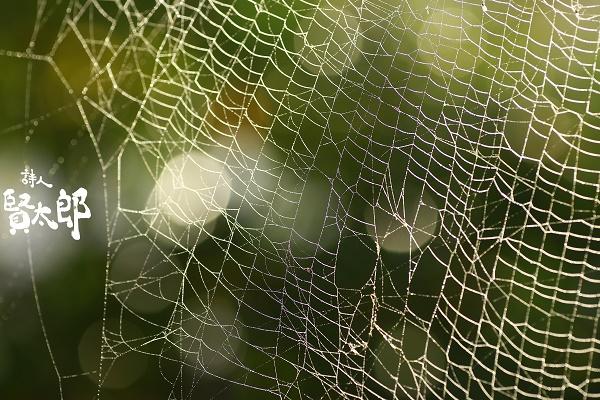 きらりくものすweb600.jpg