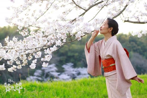 美子桜4.jpg