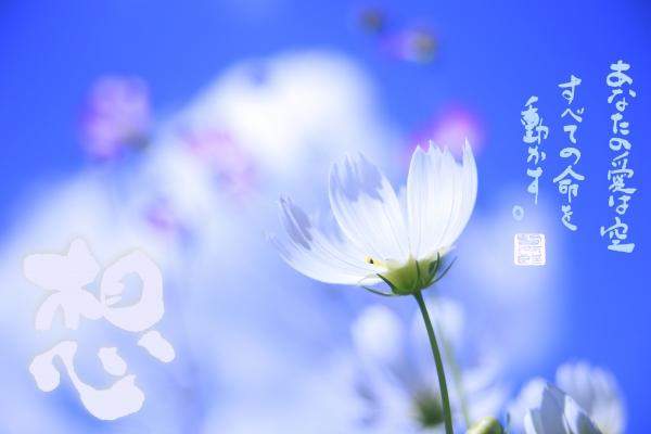 美幸さんメッセージ.jpg