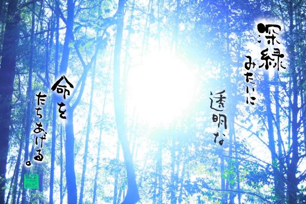 深緑の森3000.jpg