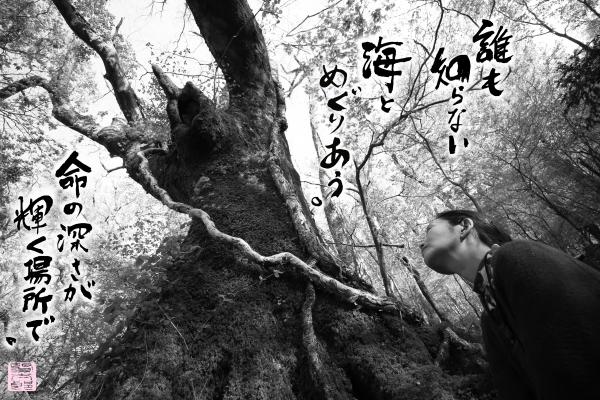 コノハナサクヤヒメ.jpg