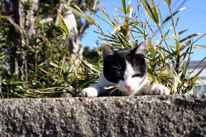 20060205_cat2