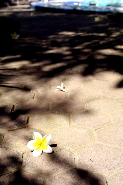 20060709_flower