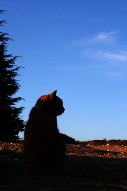 20060327_cat