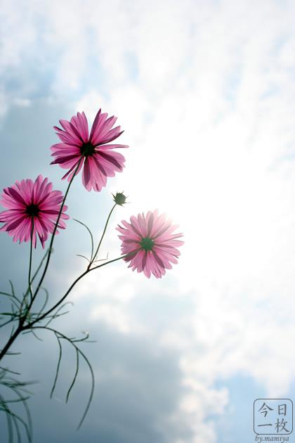 20061014_flower2
