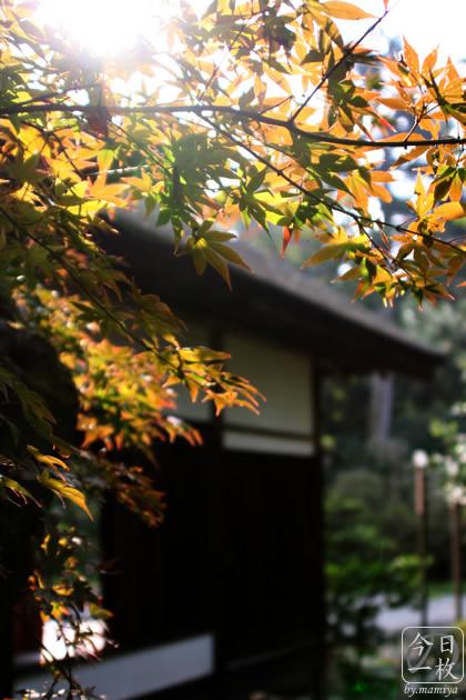 20061103_momiji