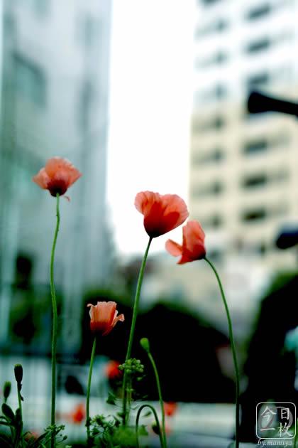 20070331_flower