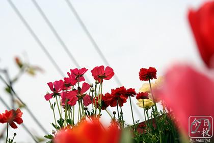 20070407_flowers