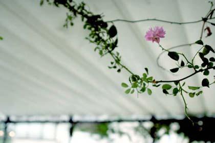 20070609_flower
