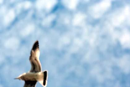 20070920_bird