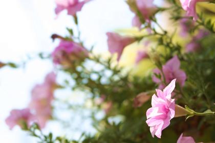 20080808_flower