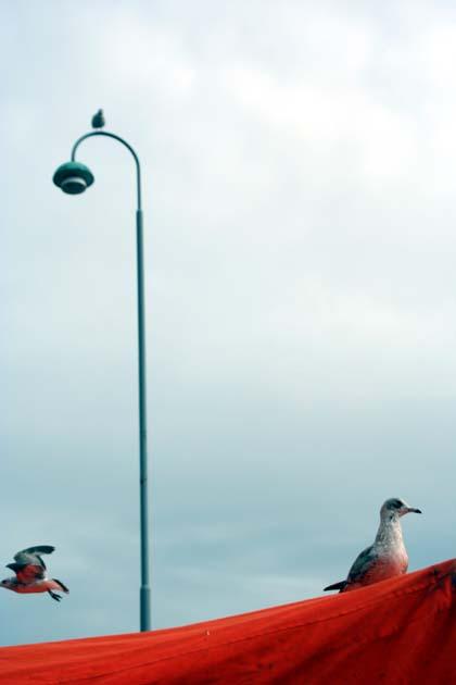 20070913_bird