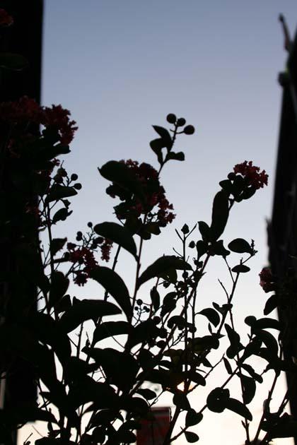 20080823_flower