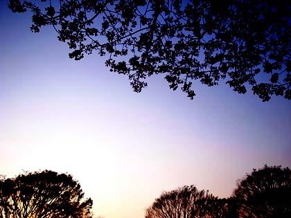 20090405_sakura.jpg