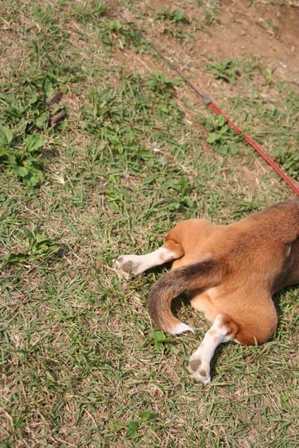 20061014_dog