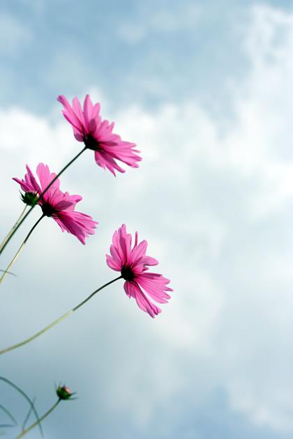 20061014_flower