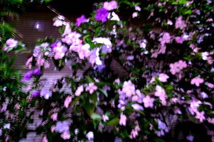 20090517_flower
