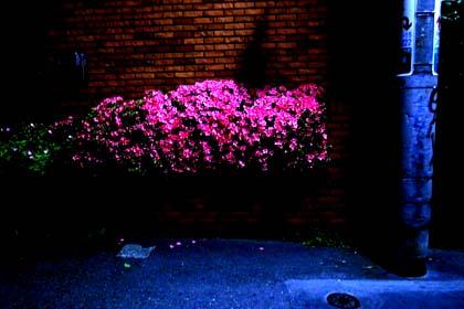 20090523_tutuji