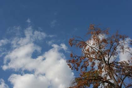 20080823_tree