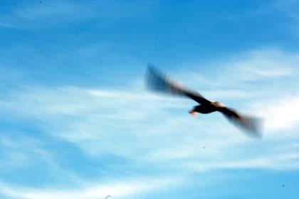 20080823_bird