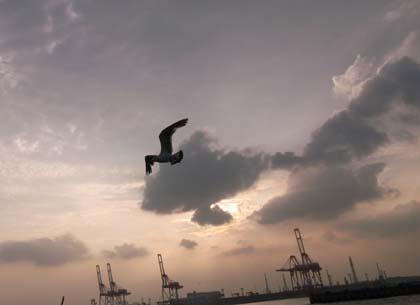 20090801_bird