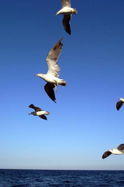 20090906_birds2