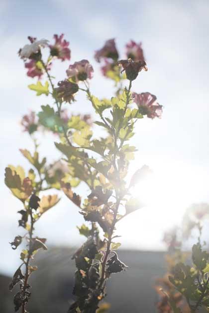 20091129_flower4
