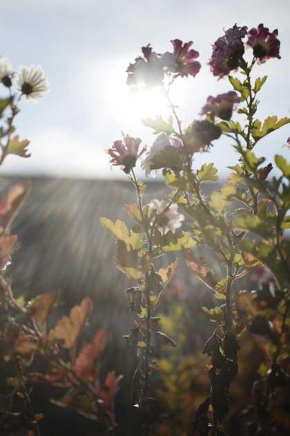 20091129_flower1