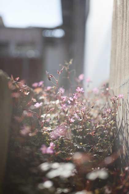 20091129_flower6