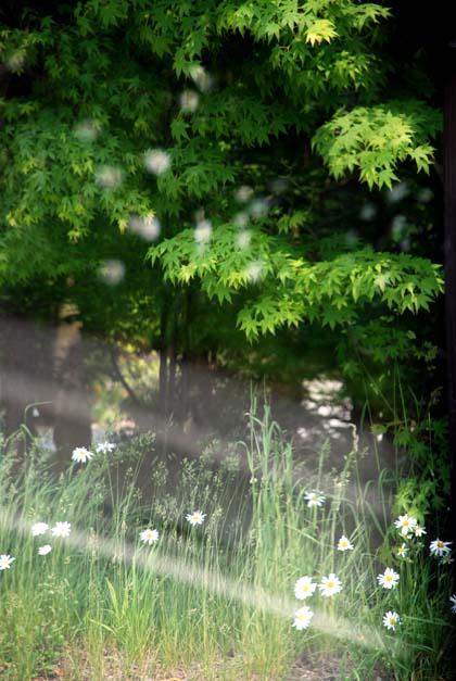 20090613_flower