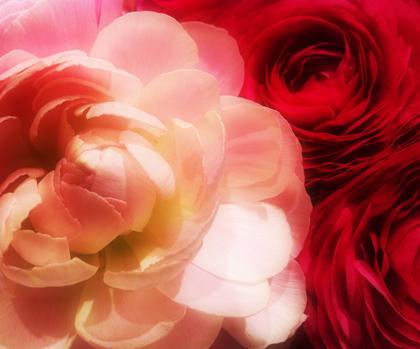 20110313_flower