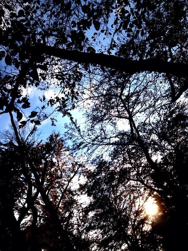 樹木見上げ