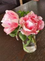 八重咲きチューリップが咲きました