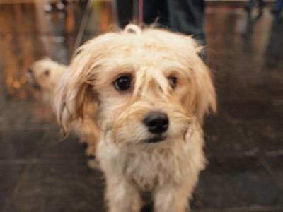 Hond(dog) mix-Antwerpen