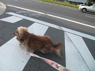 横断歩道も横切って・・・
