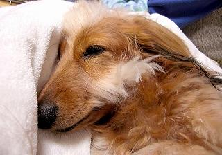 寝るときもこんな感じで