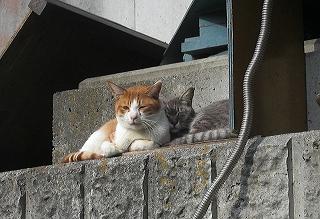次郎とケイちゃんは日向ぼっこ