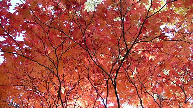 神護寺の紅葉(京都)
