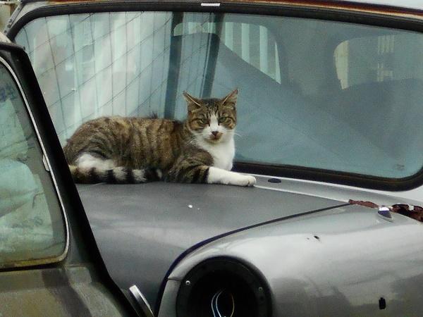 奥山 に 猫 また といふ もの あり て