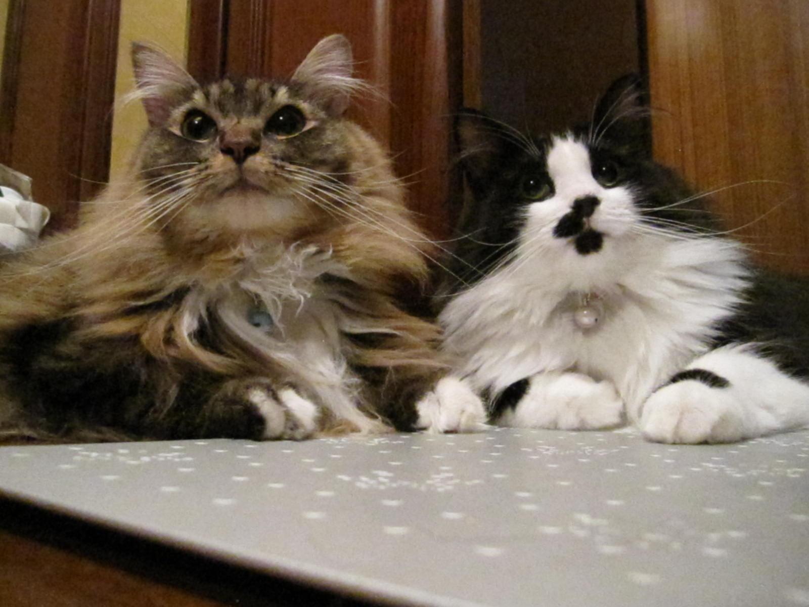 レオン&フィガロ