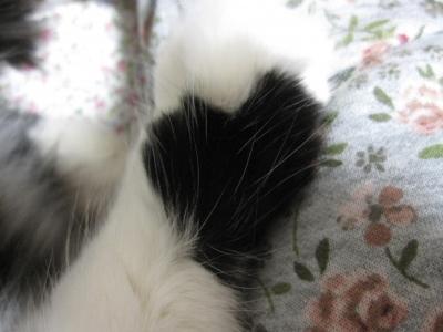 フィガロのお手手